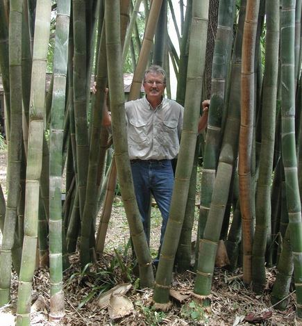 About Bamboo Nursery